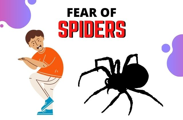 Read more about the article How Do I Overcome My Fear of Spiders?