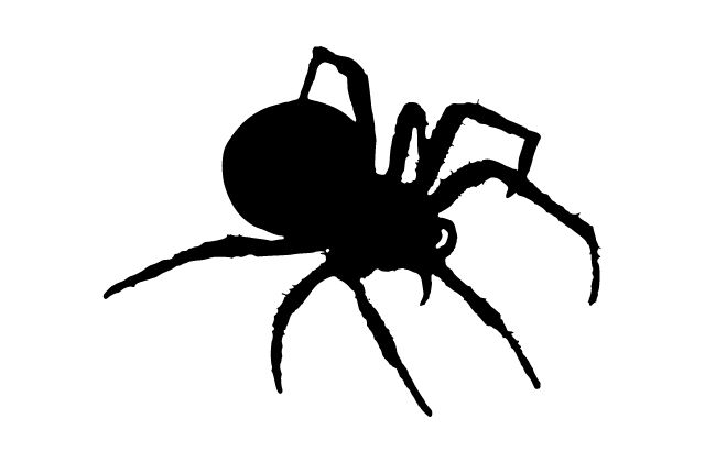 How Do I Overcome My Fear of Spiders?