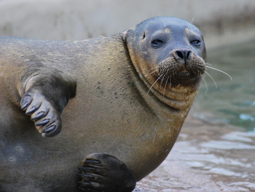 Scarborough Sea Life Centre