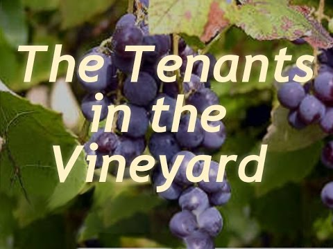 The tenants in the Vineyard