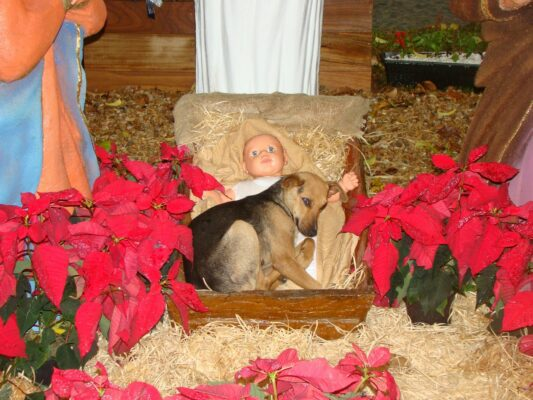Abandoned dog finds comfort with Baby Jesus … photos go viral