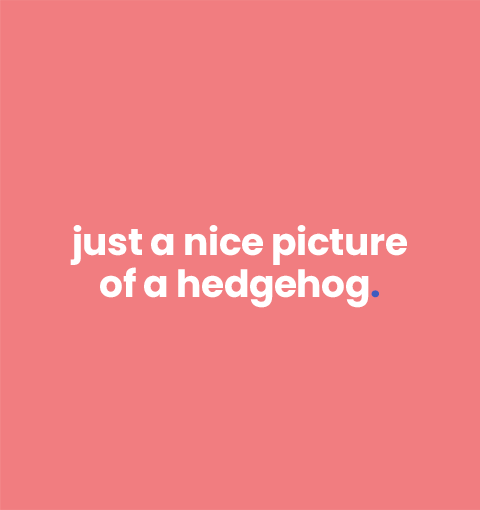 Want to see a hedgehog?