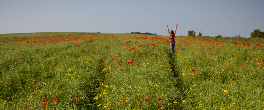 Poppy field Sussex 1