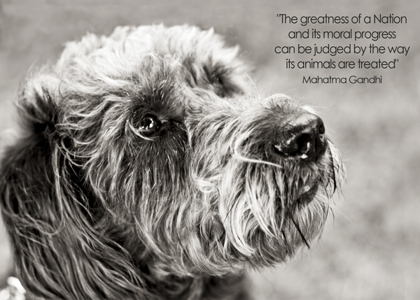 Photo of dog with quote
