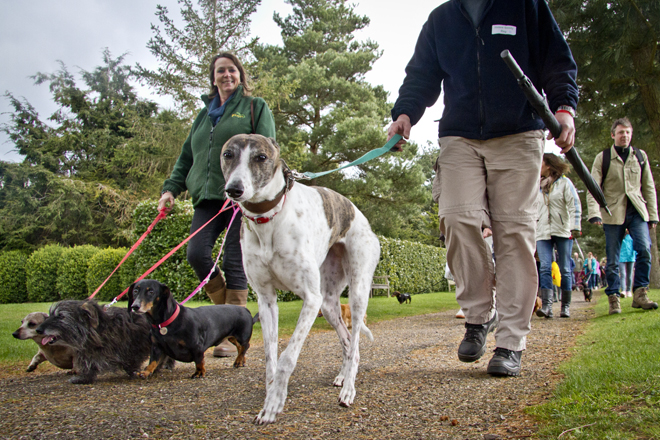 The Giant Dachshund walk at Painshill Park Surrey, where many socialised, even whippets.