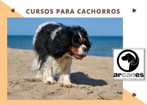 cursos cachorros