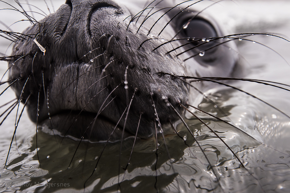 Elephant seal cub up close - D810, 16-35mm, 1/640 sec, f/6,3 @ ISO 560