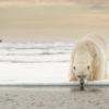 Trip report Svalbard 15.-25.07 2013
