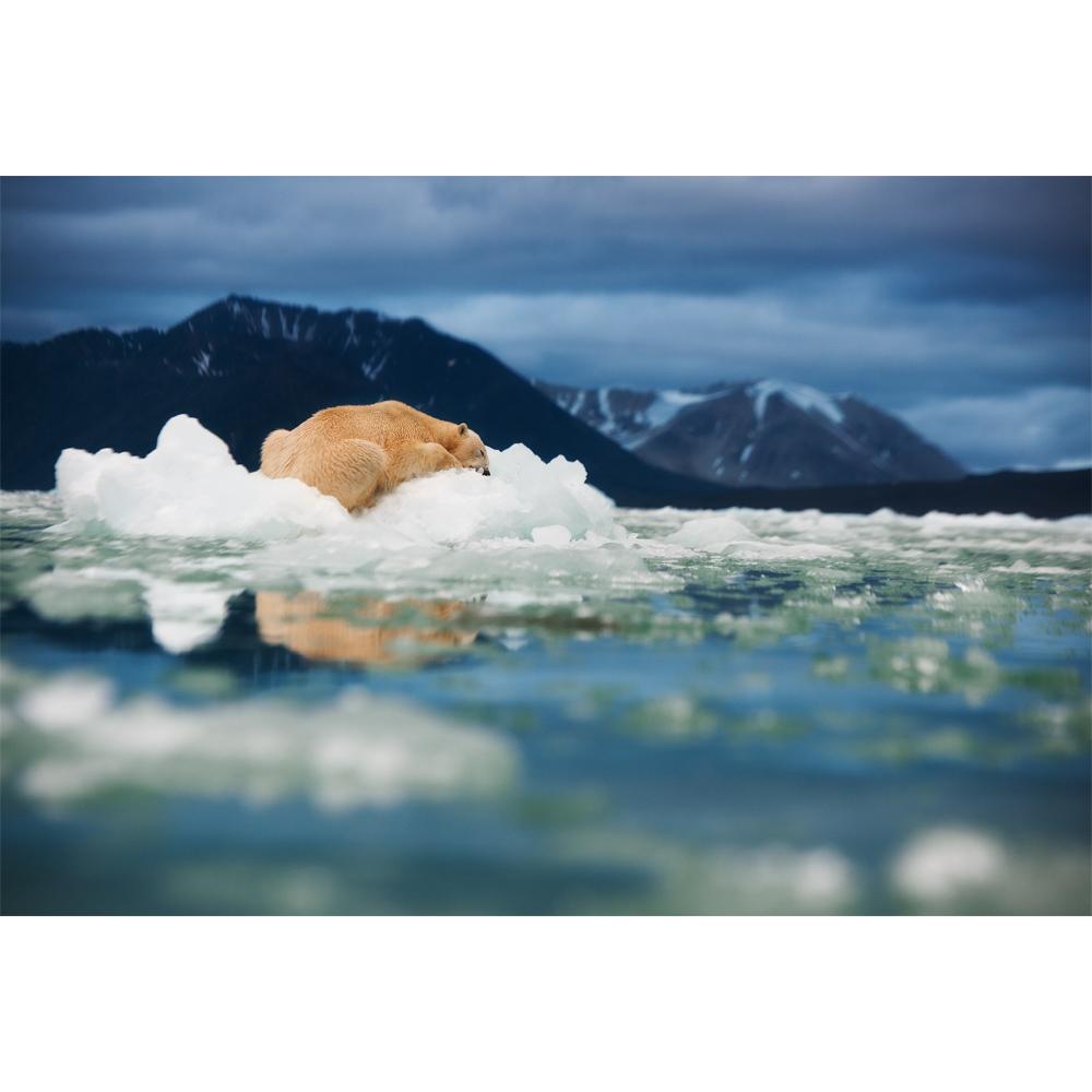 107-Arctic-dream1