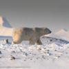 Trip report Svalbard 18.03-26.03 2016