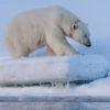 Trip report Svalbard 26.03-03.04 2016