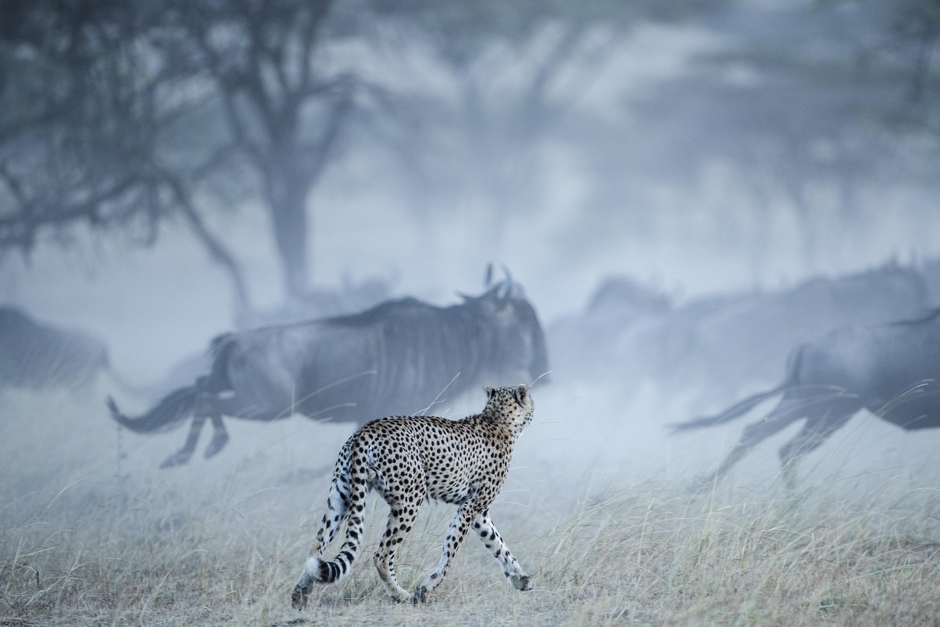 africa-photo-safari2