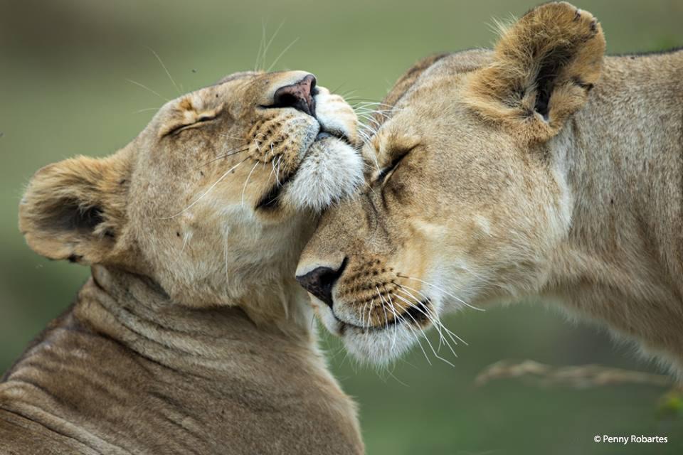 african-photo-safari-1