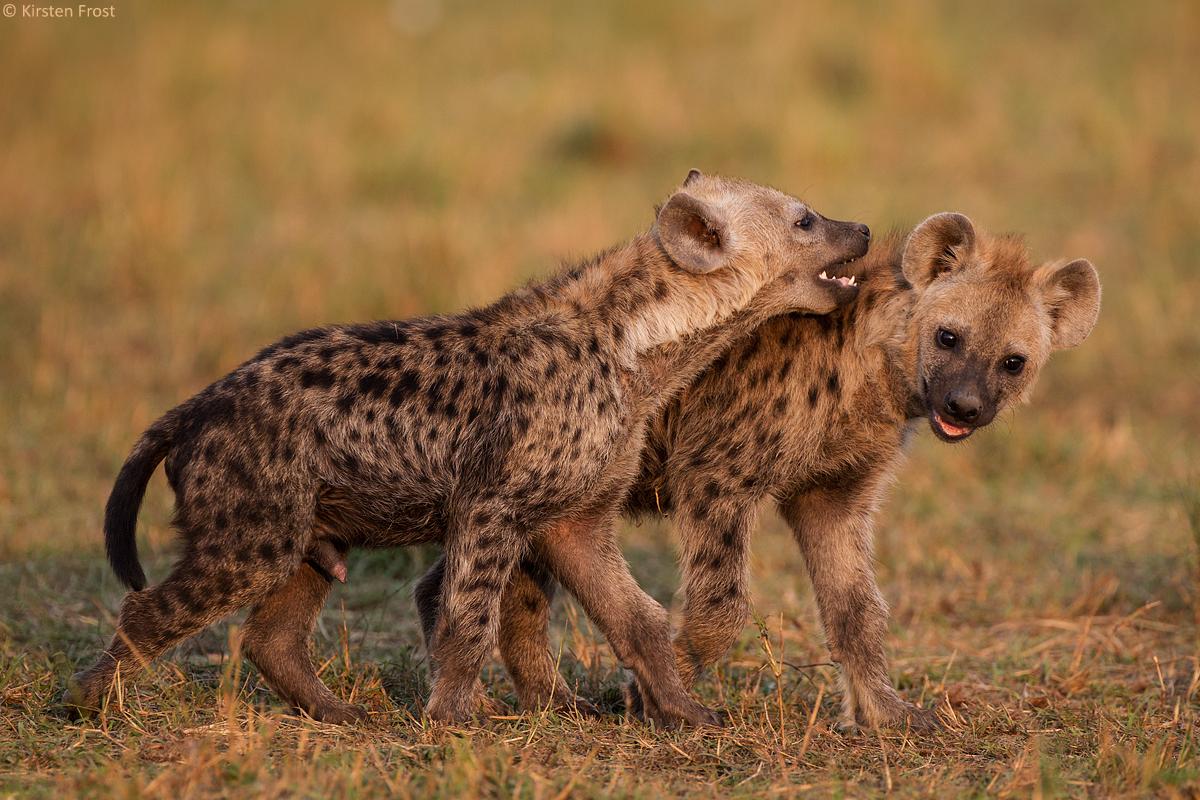african-photo-safari2