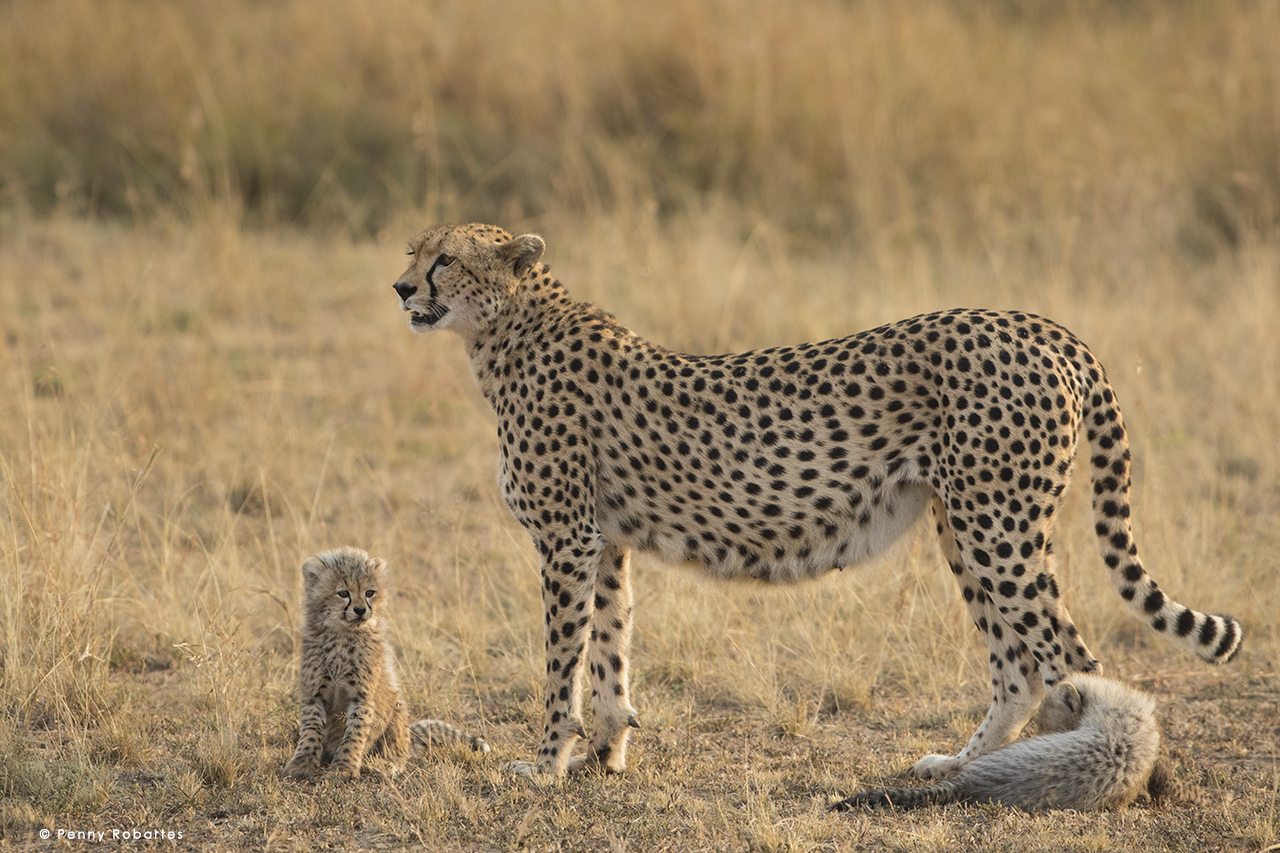 african-photo-safari3