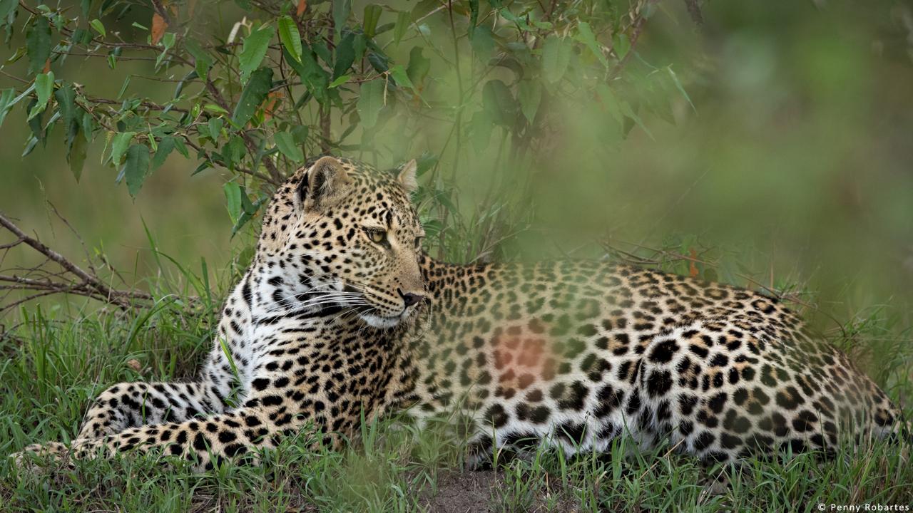 kenya-photo-safari