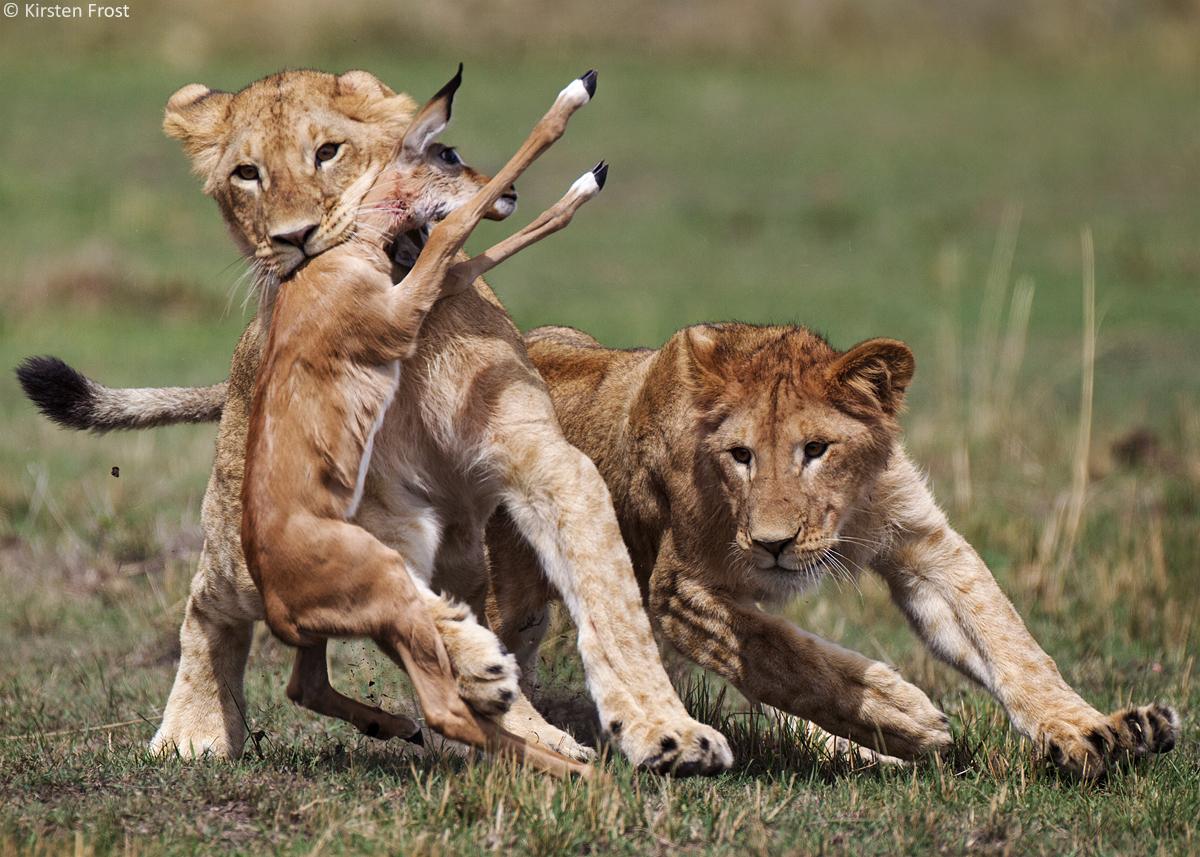 kenya-photo-safari1
