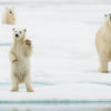 Trip report Svalbard 7-15.07 2020