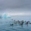 Trip report Svalbard 4-14 August 2020