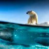 Trip report Svalbard 14.08-24.08 2020