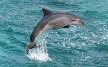 amazing Dolphin and fun facts about animals for kids.