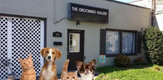 Home Grooming and More for Pet Groomers