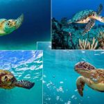 Facts-about-Sea-Turtles
