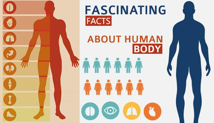 Fascinating Facts