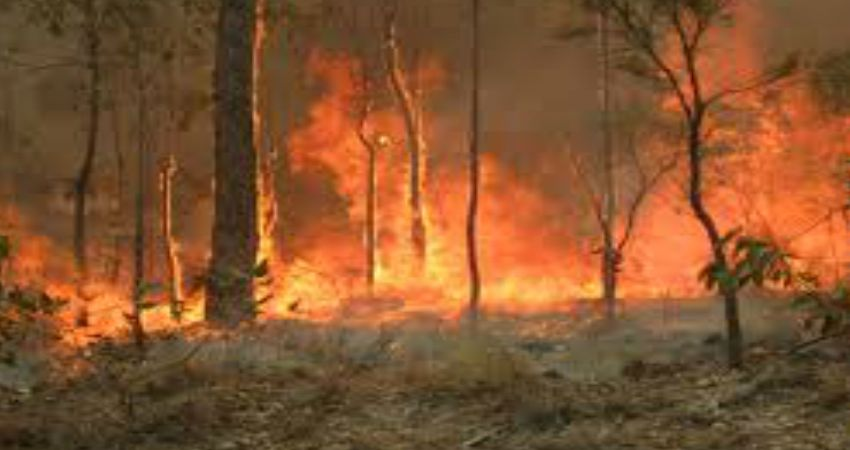 New South Wales Bush Fires