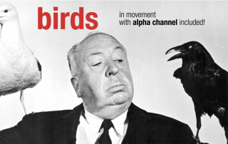 The Birds, 1963 - Alfred Hitchcock movie - How to use our birds and raise your video to pro level