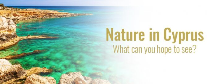 Nature in Cyprus