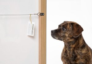 Dog looking at warranty card on back of stretched canvas