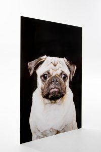 Single metal image of pug with sad face