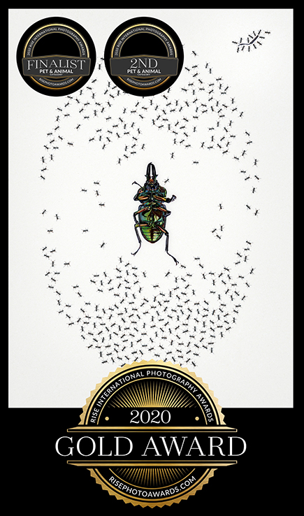 JHowell_Ant + Beetle_certificate