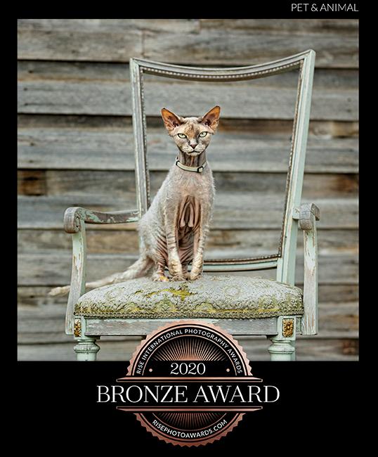 JHowell_kitty_certificate
