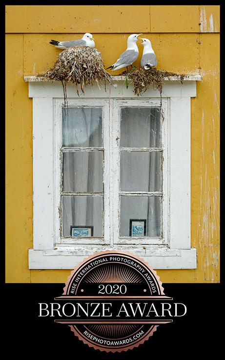 Noisy Neighbours_certificatesml