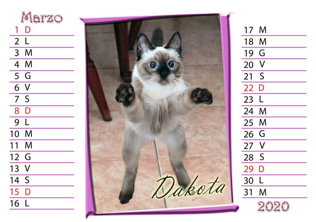 03 - marzo - dakota
