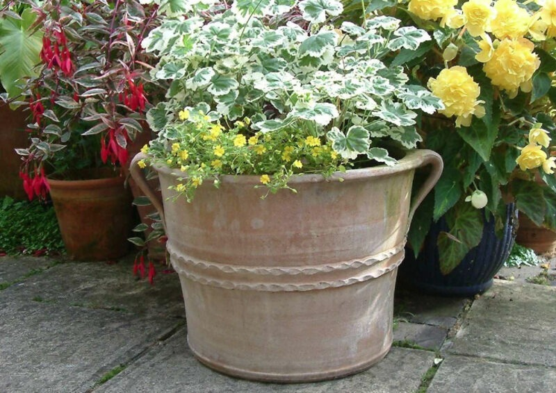 Fraski terracotta pot from The Cretan Pot Shop Rugby Warwickshire