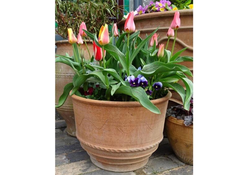 exara pot from The Cretan Pot Shop Rugby Warwickshire