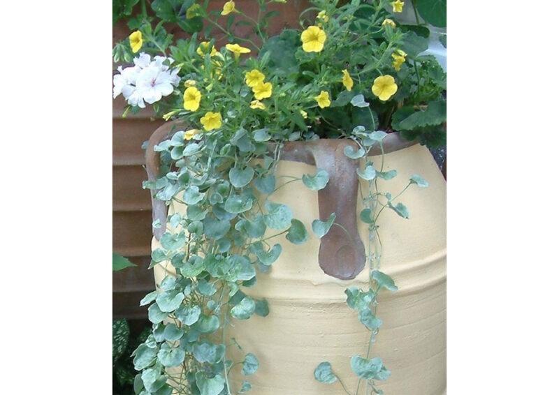 Knossos terracotta pot from The Cretan Pot Shop Rugby Warwickshire
