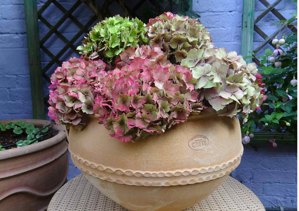Pelagia from The Cretan Pot Shop Rugby Warwickshire