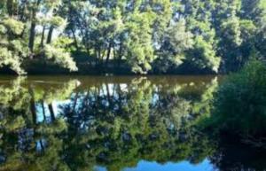 rio salvaje 3
