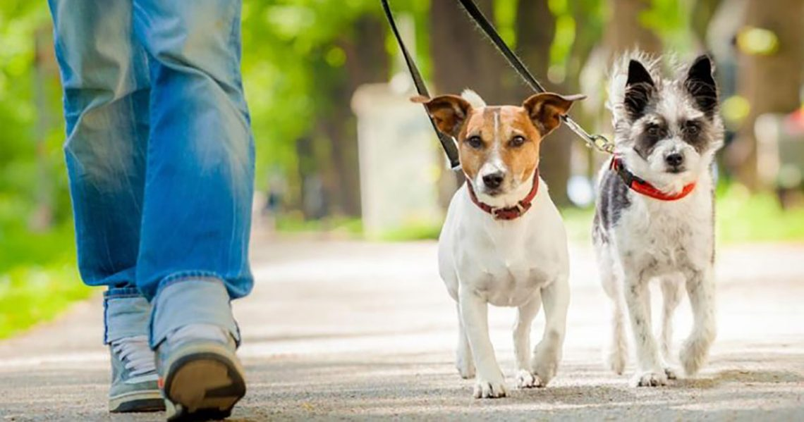 Αποφασίστηκε η αναζήτηση χώρου για τη δημιουργία καταφυγίου αδέσποτων ζώων