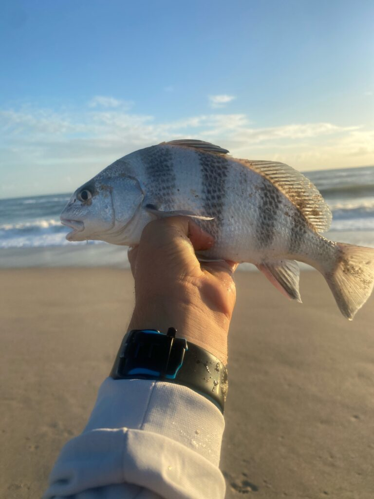 Surf Fishing for Black Drum