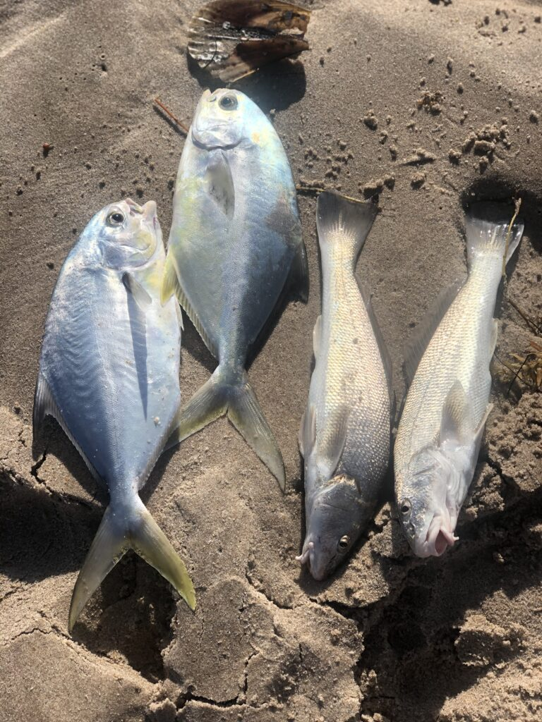 east coast fall mullet run pompano