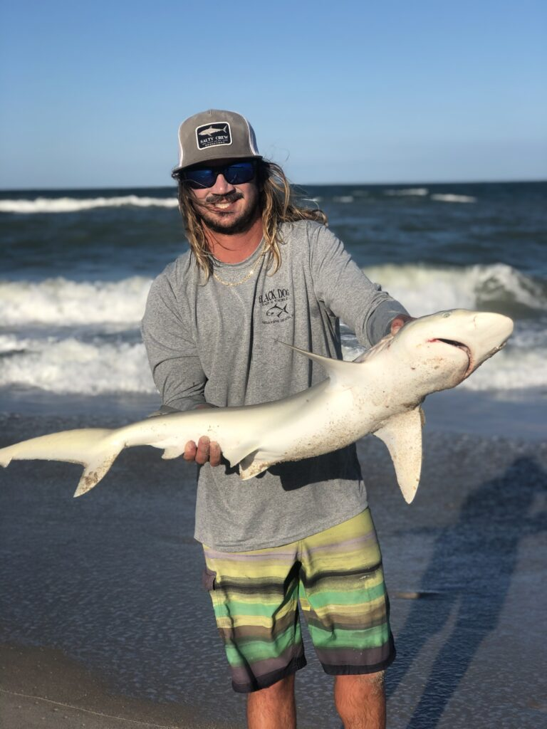 Surf Fishing for Sharks