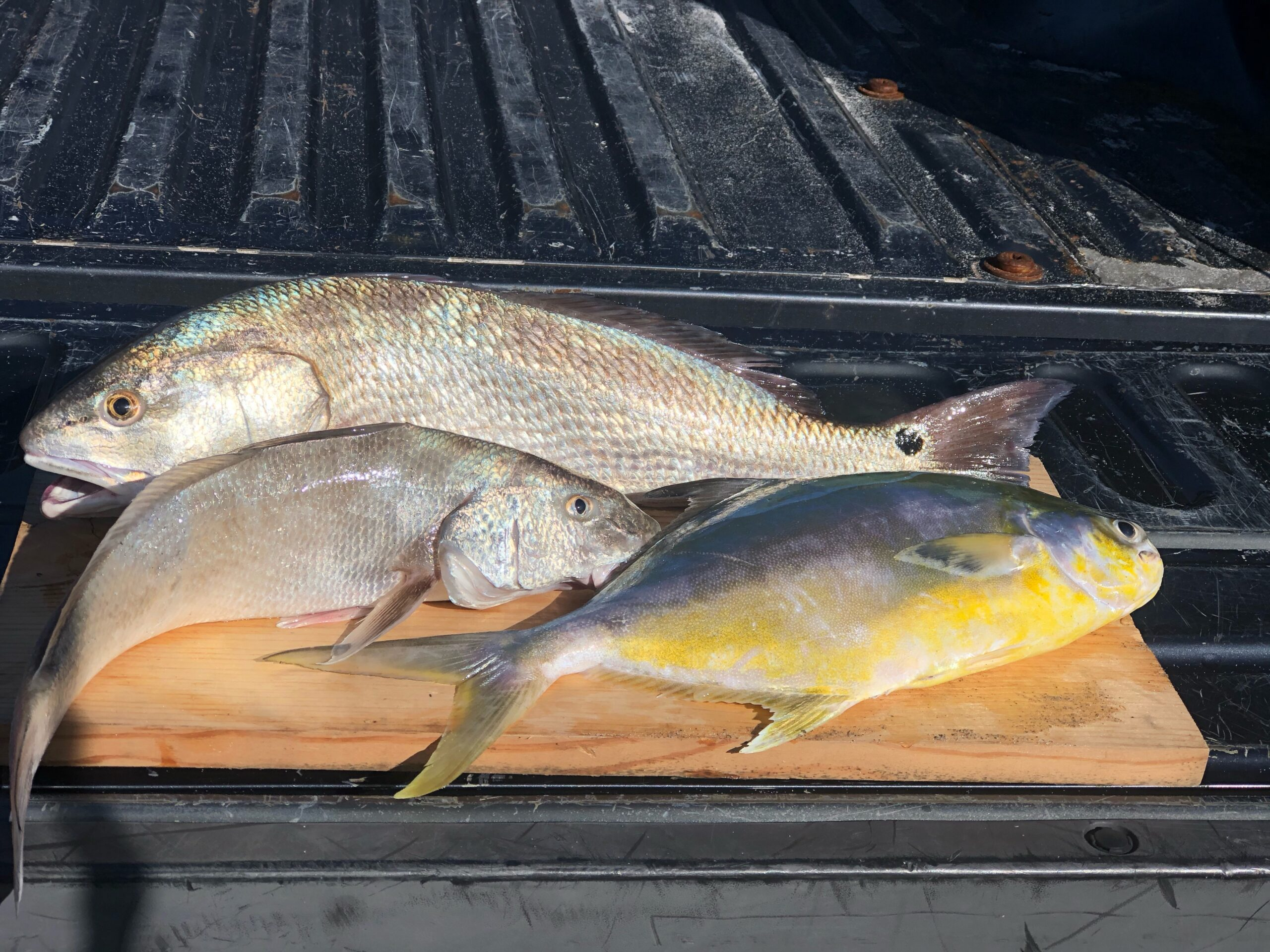 Space Coast Surf Fishing Report by Captain Lukas