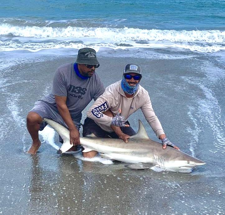 Surf Fishing for Sharks