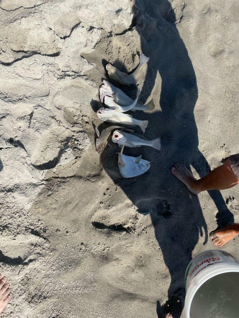 Cocoa Beach Surf Fishing Charters
