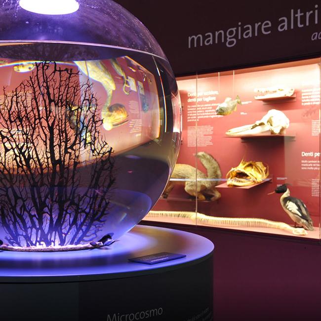 Musei Civici 01